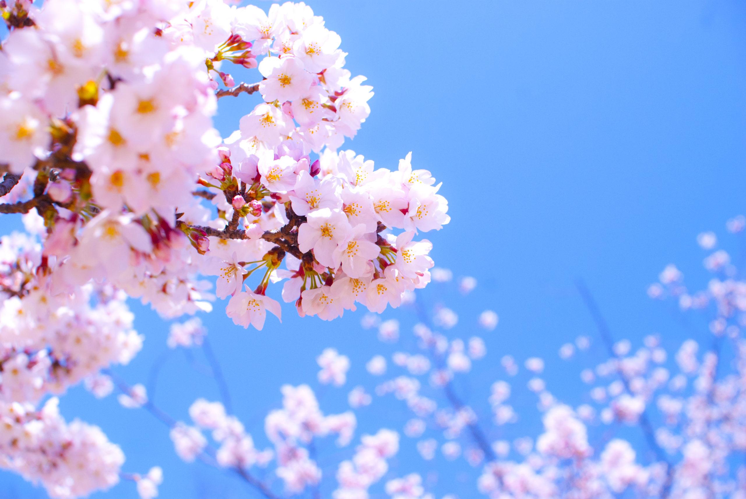 【鶴ヶ島作業所】卒業式&皆勤賞